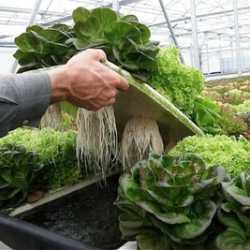 - выращивание растений